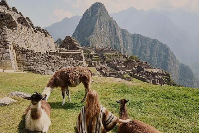 Llamas in machu picchu